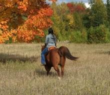 Autumn Fields Forever