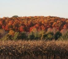 Manning Hill