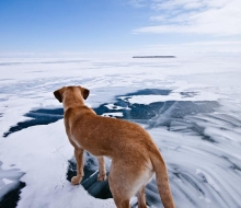 Canon explores the ice at Rockport State Recreation Area