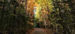 nature-trail-amy-lijewski-fall