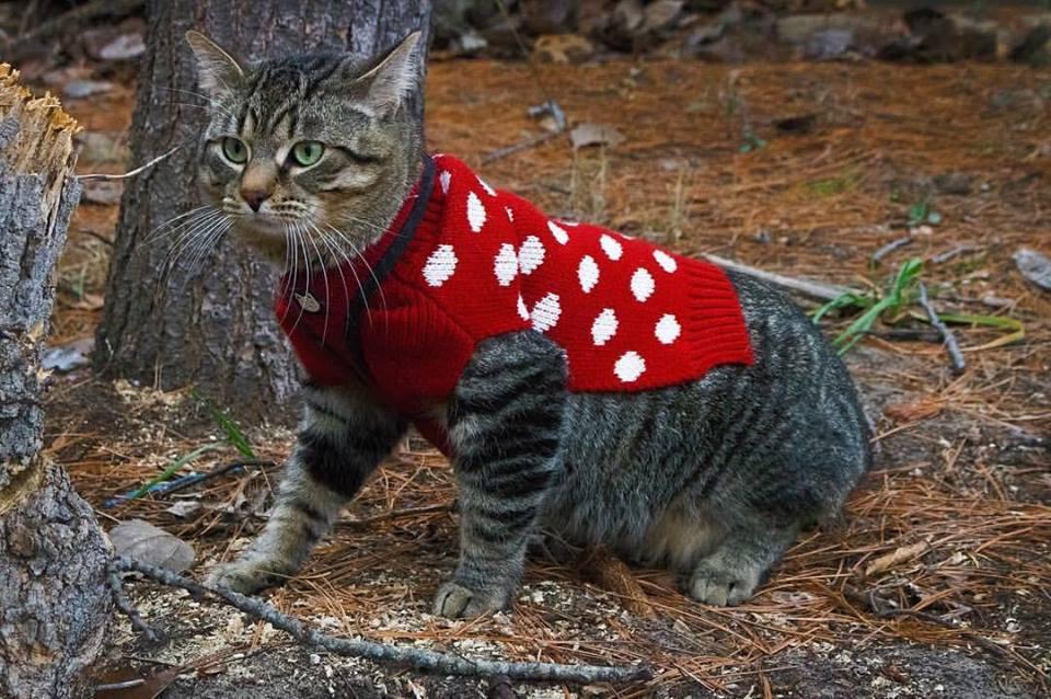 Leo the Adventure Cat