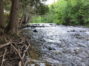 Trail at Ocqueoc Falls.